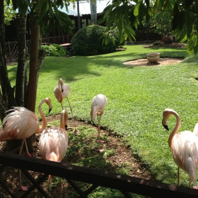 Some more pictures of the flamingos
