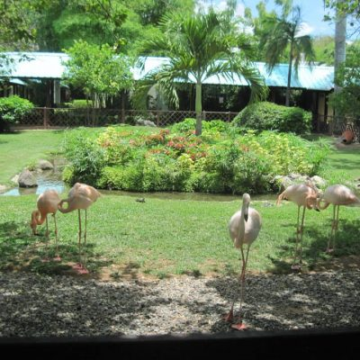 Yes…these are real flamingos right in the middle of the resort.